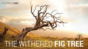 The Withered Fig Tree - St. George's Church Burlington
